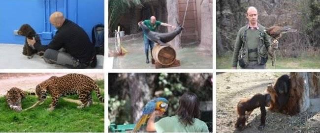 Ciclo formativo de entrenamiento de animales de Animal Nature
