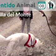 Salida de socialización canina - Boadilla del Monte